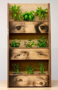 Living herb rack